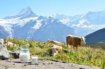 Wall Mural - Jug of milk against herd of cows. Jungfrau region, Switzerland