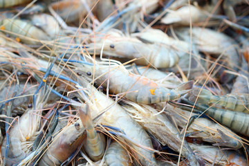 Fresh shrimps in seafood market.