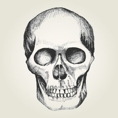 Sketch illustration of a human skull
