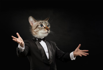 Business man cat head