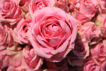 Pink roses in bridal bouquet