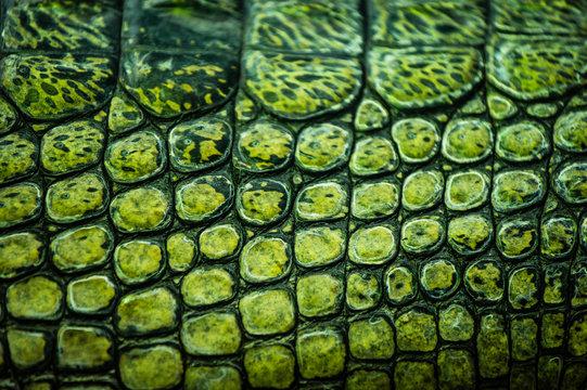 Detail of green gharial skin