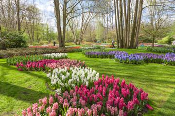 Fototapete - Keukenhof- Tulip Garden- Netherlands