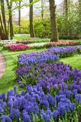Fototapete - Keukenhof Garden, Lisse, Netherlands