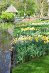 Fototapete - Blooming flowers in Keukenhof Garden, Lisse, Netherlands