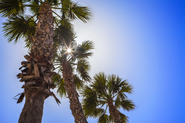 Palm trees with tropical sunshine and summer blue sky.