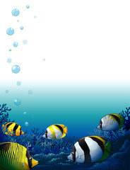 Fishes under the sea