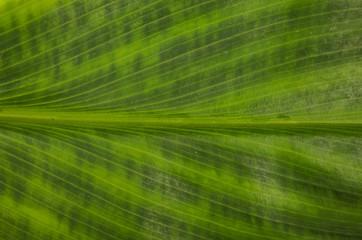 leaf background close up