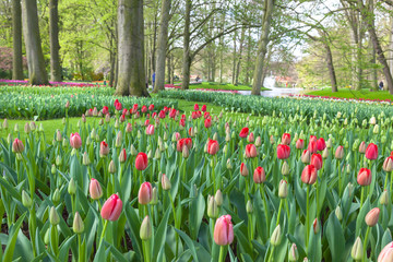 Fototapete - Springtime in Keukenhof Gardens, Lisse, Netherlands.