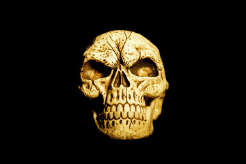 Orange Skull Isolated on Black