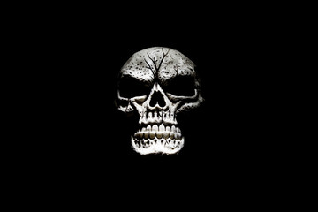 Skull Isolated on Black II