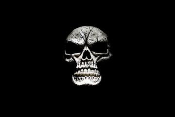 Skull Isolated on Black II