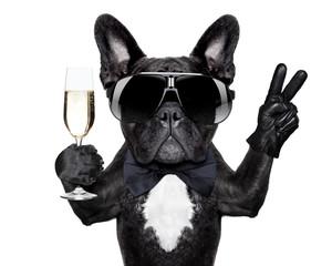 Photo sur Plexiglas Chien cocktail dog