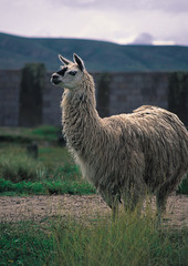 페루 여행포토