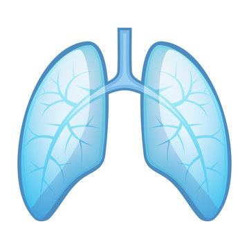 Human Health Lungs and Bronchi