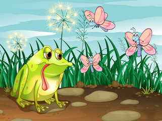 A frog and the three butterflies