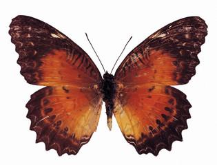 나비 디테일