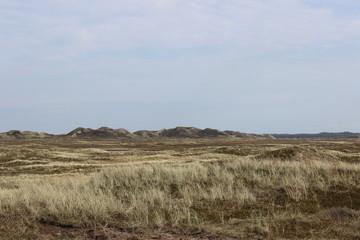 Dünenmeer