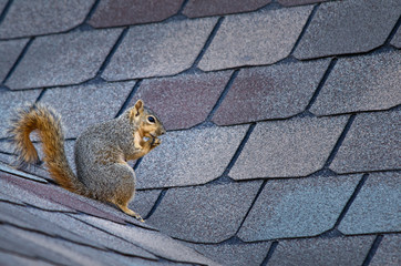 Photo sur Aluminium Squirrel Cute squirrel sitting on the roof