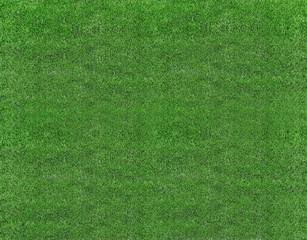 green natural grass of a Football soccer field