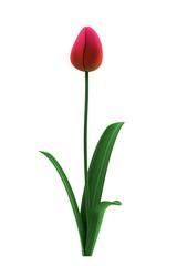 realistic 3d render of flower