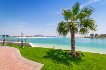 Palm tree at the beach in Abu Dhabi, United Arab Emirates