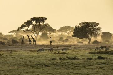 Poster de jardin Afrique Silhouette di giraffe