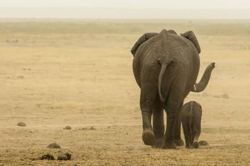 Wall Mural - Elefante mamma e figlio