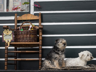 Welcome from a pair of cute maltese dogs