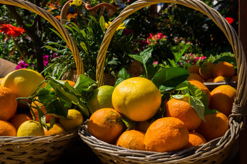 Oranges and Flowers