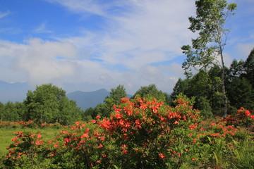 レンゲツツジ咲く美ヶ原高原