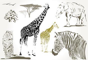 wild african animals giraffe, jaguar zebra, elephant