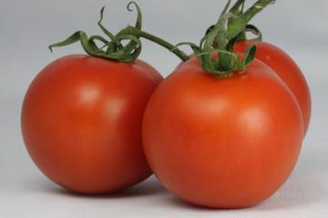 Tomate  (Solanum lycopersicum L.)