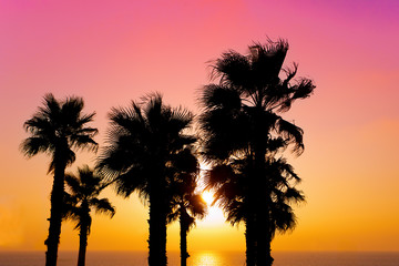 Tropical beach with palm trees at sunset background