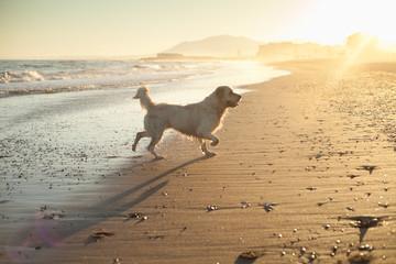 Marbella, pies, spacer, woda, morze, gry, zabawy,