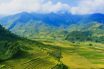 Papiers peints Les champs de riz terraced rice field