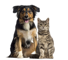 Cat and dog sitting together