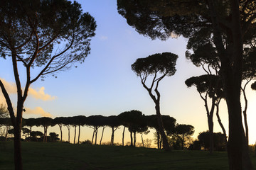 Rome City Park Sunset. Spring Picture with fresh vibrant colors