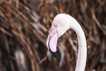 Flamingo Detail Photo