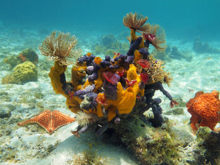 Seabed with colorful sea life