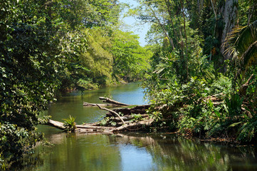 Small tropical river with fallen tree in the jungle