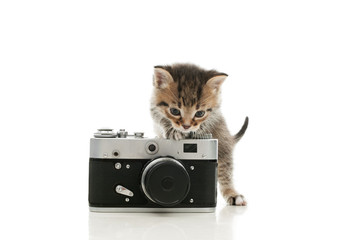 striped kitten and a vintage camera