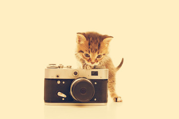 striped kitten and a camera