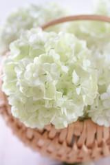 Wall Murals Hydrangea White hydrangea flowers on rustic wooden basket