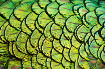 Plumage as a natural background Wall mural