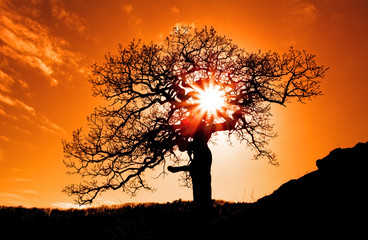 Fototapete - Alone tree with sun and color red orange yellow sky