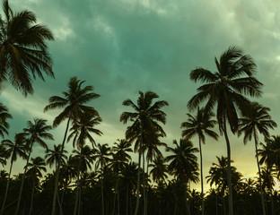 Beautiful sunset, palm trees and azure blue green yellow sky