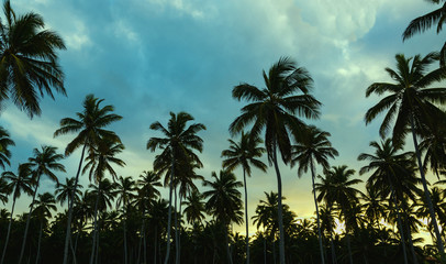 Beautiful sunset on an exotic beach with palm trees on blue sky