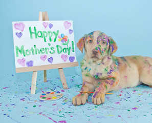 Wall Mural - Happy Mother's Day Puppy