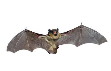 Bat 3